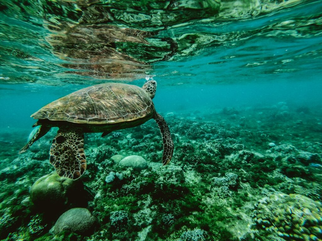 Żółw stepowy w naturze