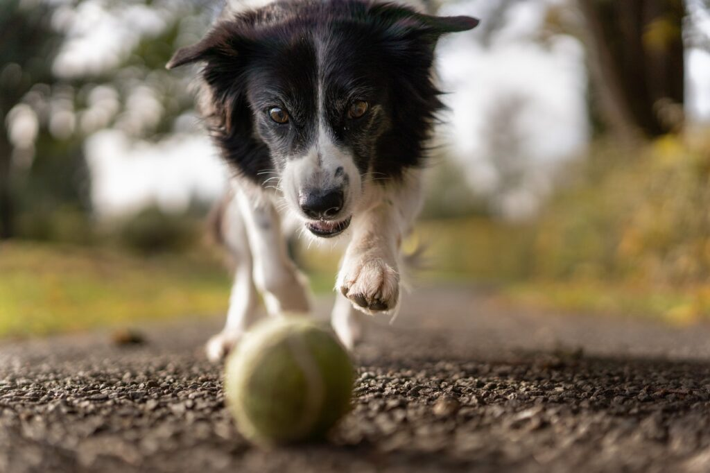Zdrowy pies - dieta barf dla psa