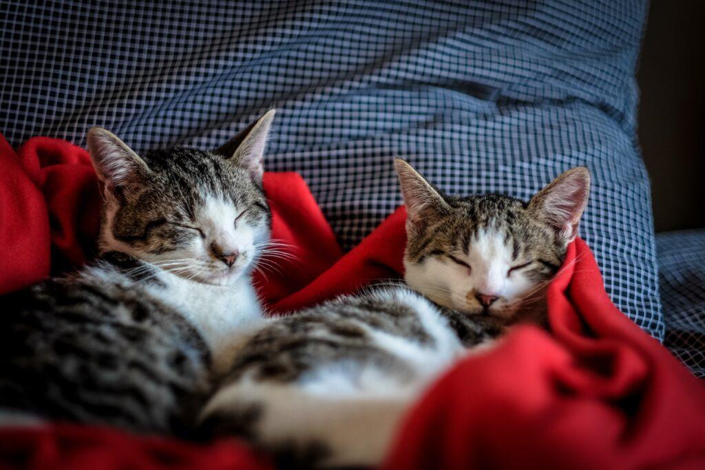 koty - a koci katar i leczenie