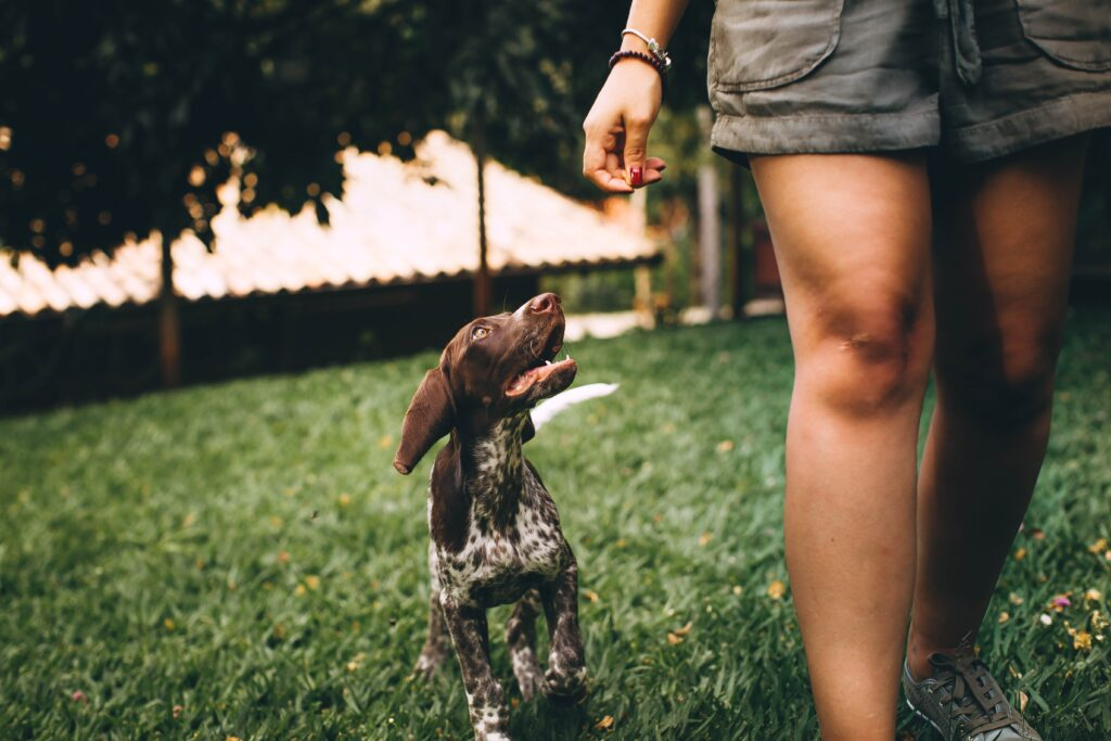 dlaczego pies je trawę?