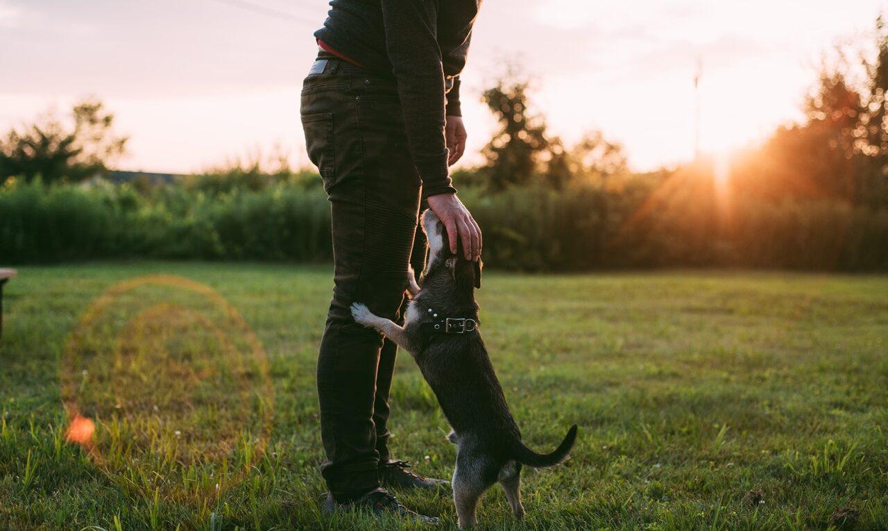 pies, który je trawę